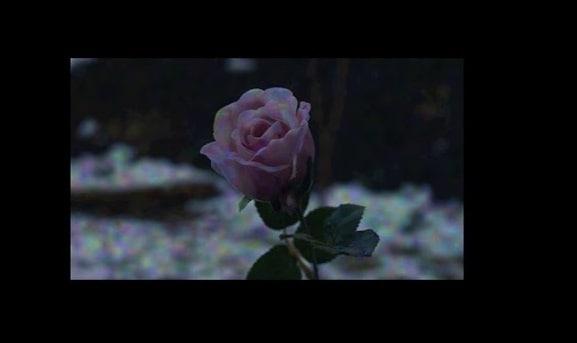 margiela-zgnila-roza